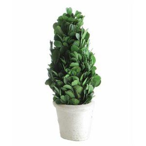 Boxwood Cone Topiary W/White Clay Pot 1183